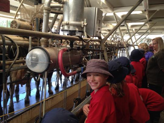 Students in the milking shed