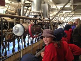 Students visiting a milking shed