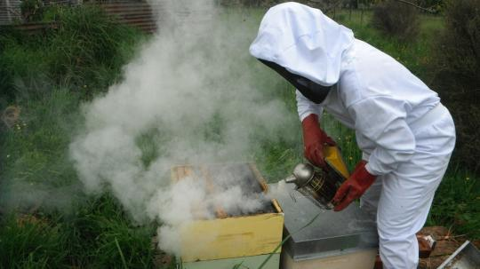 Kiwi break outcome: Bee keeping suit