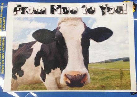 Big book for From Moo to You
