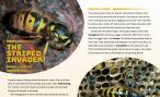first two pages of wasp journal article